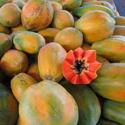 Papaya - Carica